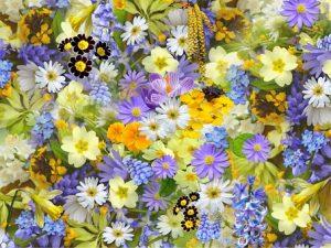 spring-flowers-110671__340